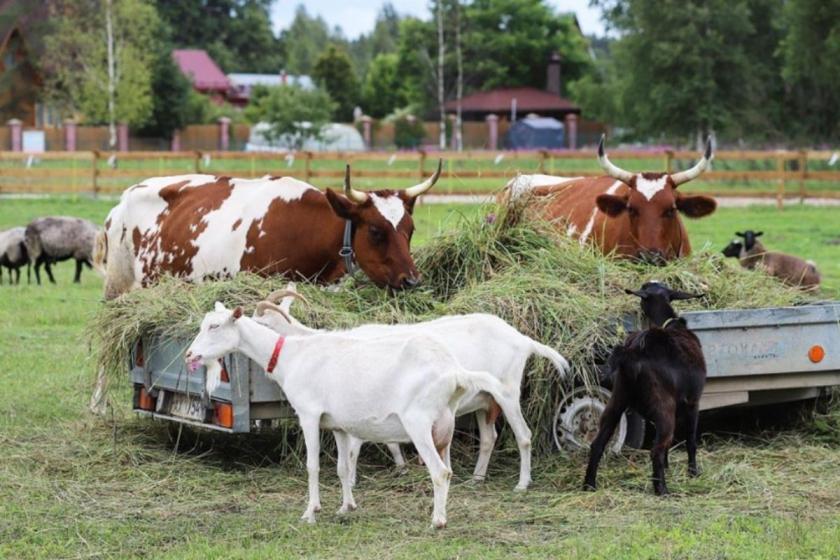 Экоферма «Зеленый Глухарь»: с заботой о животных